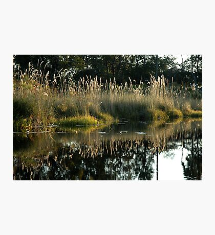Okavango Delta, Botswana Photographic Print