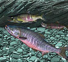 Chum Salmon by RalphMartens