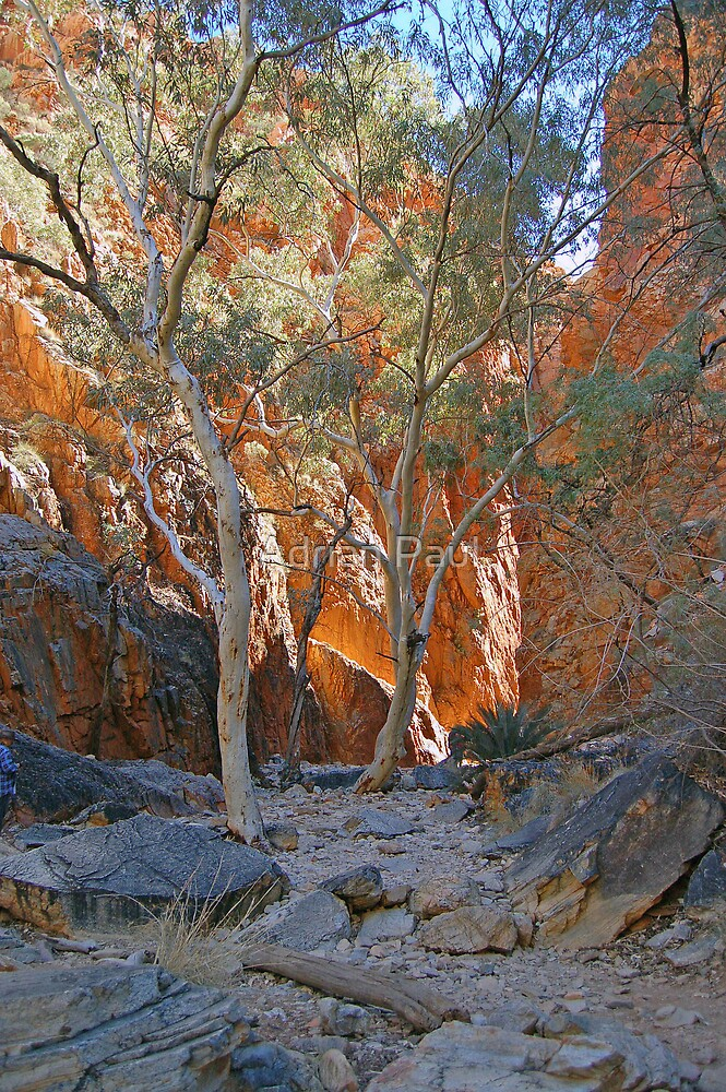 Standley Chasm. Northern Territory, Australia by Adrian Paul