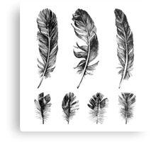 hand drawn feathers design Metal Print