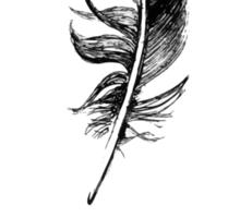 hand drawn feathers design Sticker