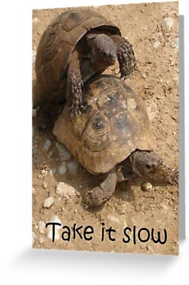 Take It Slow Valentine - Mating Tortoise Humour by taiche