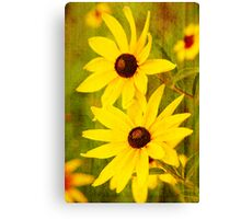Yellow Flowers - Sandstone Texture Canvas Print