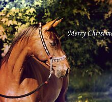 Christmas - Badet Arabian Mare by DiamondR