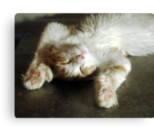Mister Flat Out Canvas Print