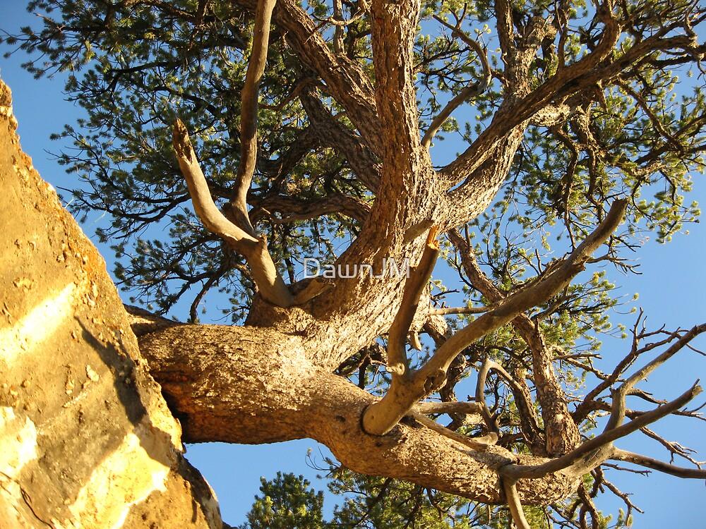 North Rim Red Cedar by DawnJM