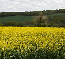 Rapeseed fields by Keith Larby