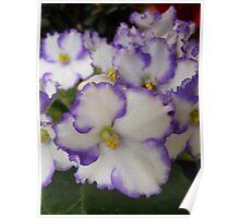 Violetas (I) Poster