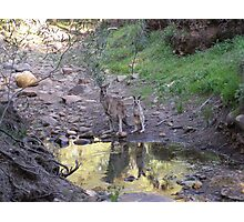 Reflections! Early morning at water hole. Photographic Print