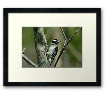 032609-4 Framed Print