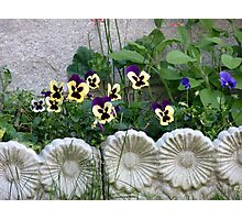 Lovely framed Flowerbed Photographic Print