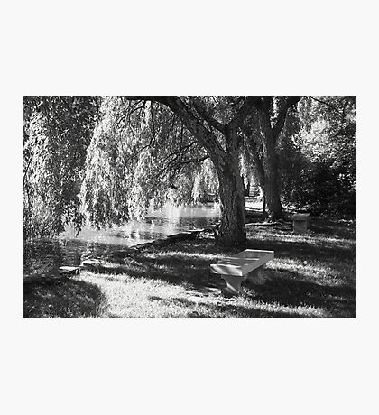 Serenity Under the Willow Trees Photographic Print