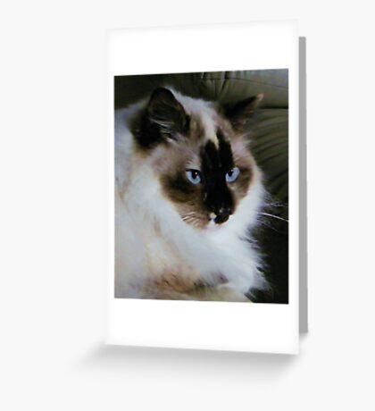 Boomer Blue Eyes Greeting Card
