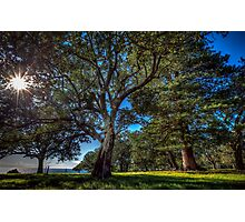 Norfolk Island: Early Morning At Simons Waters Photographic Print