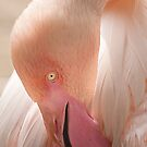 Tickled Pink by Bobby McLeod