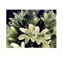Cream Bouquet Art Print