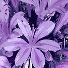 Lilac Ladies by Sue Cotton