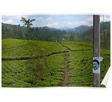 Head in a tea plantation, Hatton, Sri Lanka Poster