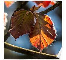 Macro Leaves Square Photo Poster