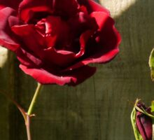 Red Red Rose......... Sticker