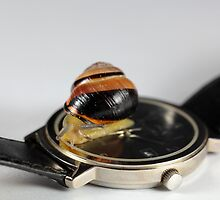 Snail on a watch by Zosimus