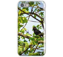 singing bird iPhone Case/Skin