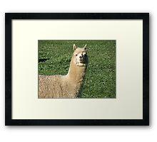 Say Cheese... Framed Print