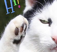 Hi from the Paw Greeting Card by simpsonvisuals