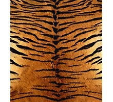 Tiger Strips Fur Photographic Print