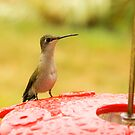 Hummer Enjoying Rain by Trudy Wilkerson