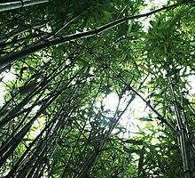 Bamboo by Ms-Bexy