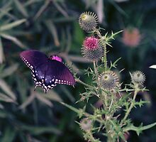 BUTTERFLIES & BUGS by MICKSPIXPHOTOS