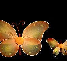 Butterfly by terrebo