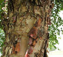River Birch Bark by linmarie