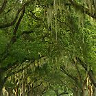 Spanish Moss pathway by kinz4photo