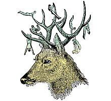 Deer Gymnastics Photographic Print