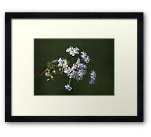 White spring blossom. Framed Print
