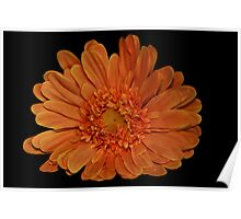Big Colors Daisy Poster