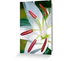 Lilies Series 5 Greeting Card