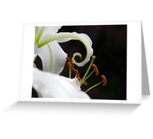 Lilies Series 4 Greeting Card