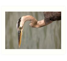 Portrait of a Heron Art Print