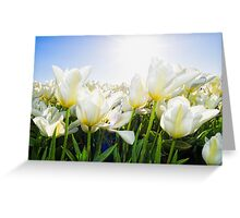 Tulips from Holland Greeting Card