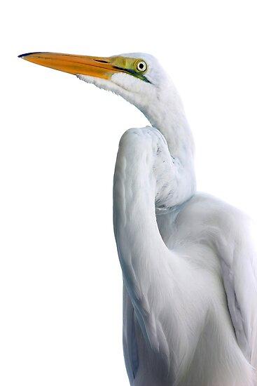 Egret by kinz4photo