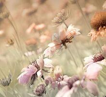Prairie Dance  by Elaine  Manley
