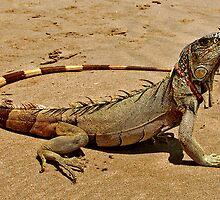 Fancy Iguana 2 by MaluC