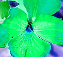 Abstract Pansy by Sharon Harvey