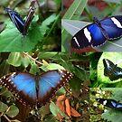Blue Butterflies by ienemien