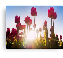 Pink Tulips at Sunset Canvas Print