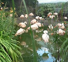 Flamingos flaming at the zoo by Yonmei