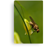 Asparagus flower and insect Canvas Print